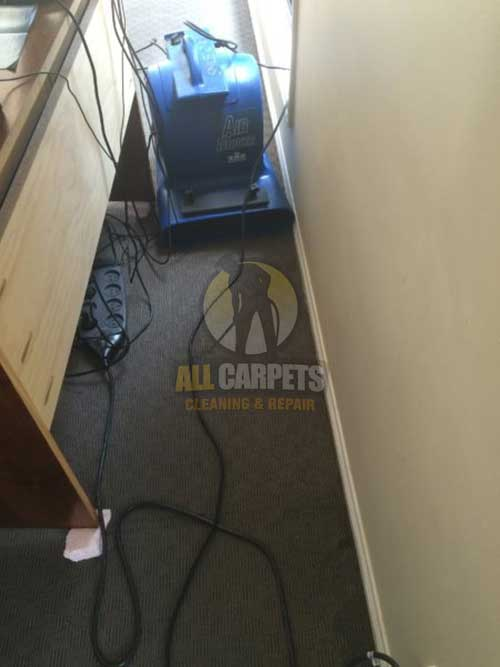 allcarpets while home carpet cleaning