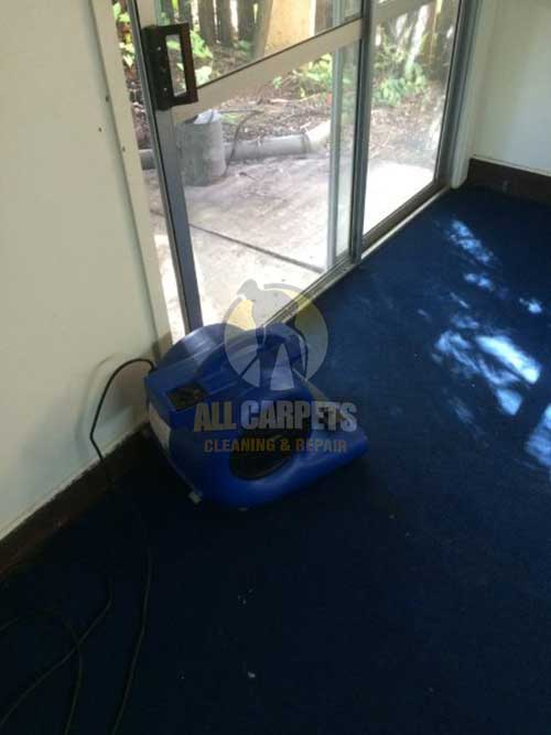 Caulfield North dirty blue carpet needed to be cleaned