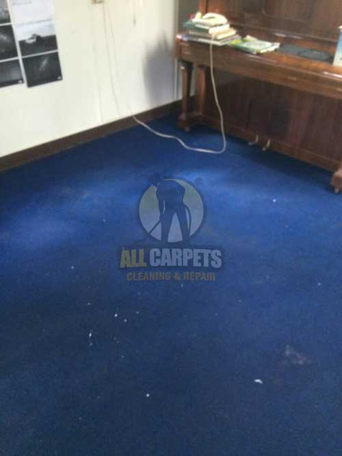 Greenwith dirty dark blue carpet before allcarpets cleaning job