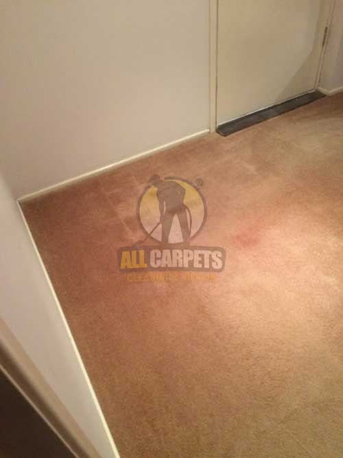 Brisbane scraped shaded carpet before cleaning and repairing