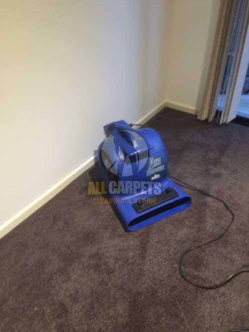 Eastern Suburbs wet dirty carpet before cleaning