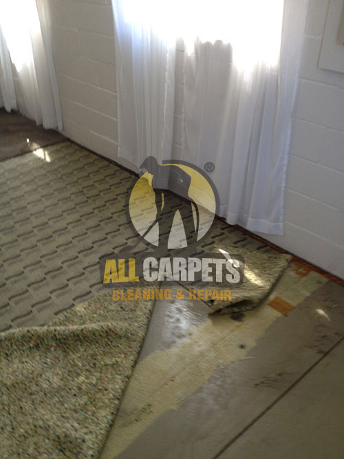 Carpet needs to be repaired and installed in Adelaide