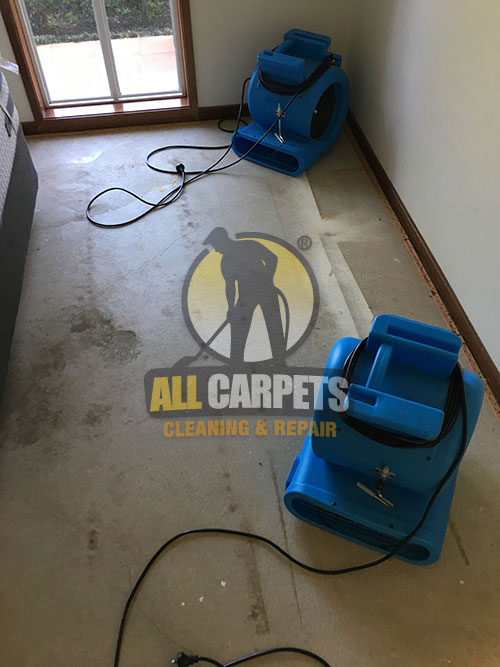 best equipment to repair and fix floor and carpets in Perth